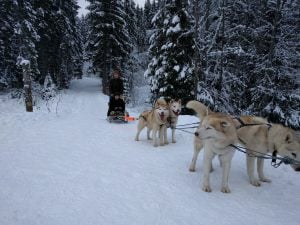 Dog Sledding in Bukovel