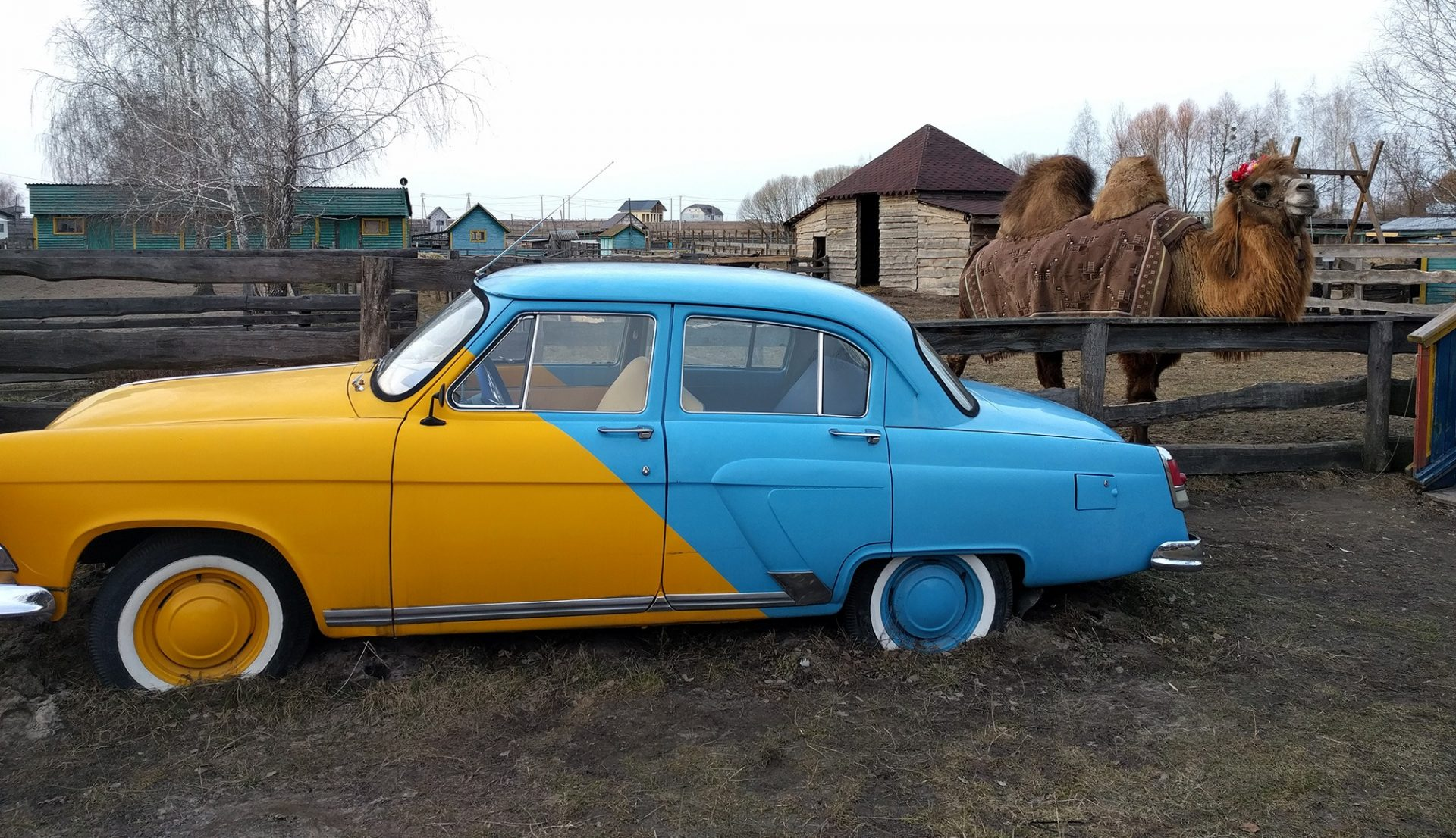 Ukrainian Car and a Camel